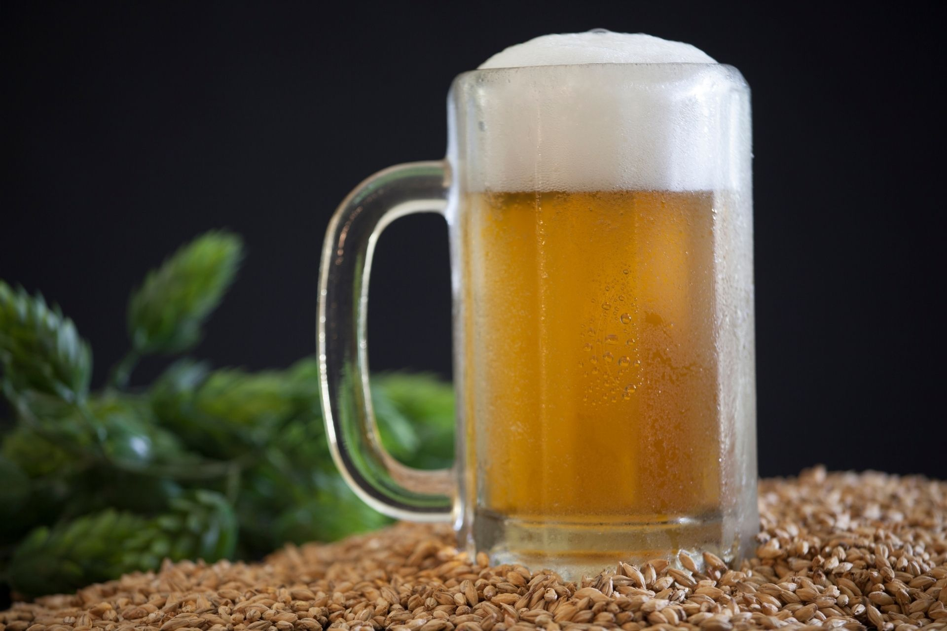 What Is The Difference Between a Pilsner and a Lager?