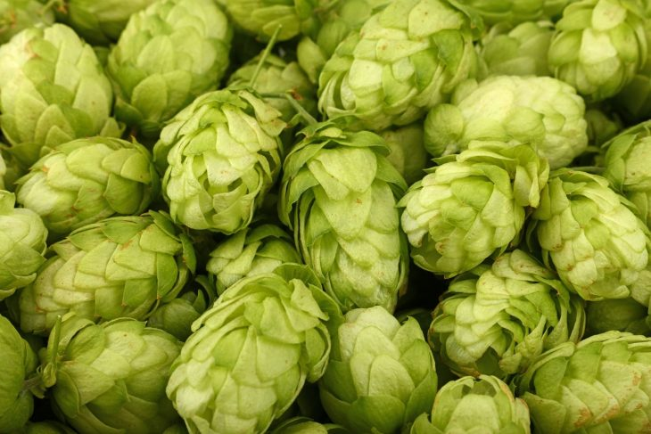 Ultimate List of Hop Varieties for Homebrewing_Sound Brewery