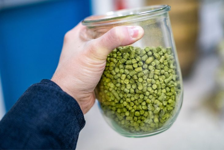 Noble Hops – Everything You Need to Know_Sound Brewery