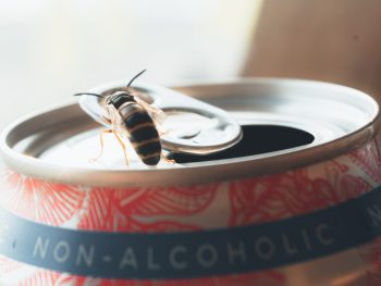 What's The Point of Non-Alcoholic Beer?